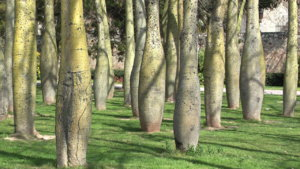 Birnenbäume im alten Flußbett.jpg